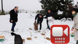 KARDA KALAN SOKAK HAYVANLARINI BESLEDİLER (video haber)